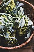 Freshly harvested green Romanesco cauliflowers in wicker basket