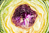An artichoke heart (close up)