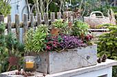 Holzkasten winterfest bepflanzen mit Winterheide, Torfmyrte, Wolfsmilch und Zuckerhutfichte, dekoriert mit Sternen