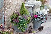 Herbst Bepflanzung mit Knospenheide, Zuckerhutfichte, Johanniskraut Magic Marbles 'Ivory', Purpurglöckchen und Alpenveilchen