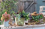 Herbstliches Arrangement mit Johanniskraut Magic Marbles 'Ivory', Purpurglöckchen, Efeu und Segge, Blätterstrauß im Krug