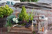 Holzkasten mit Christrose, Zuckerhutfichte, Knospenheide, Purpurglöckchen, Drahtwein und Gräsern, Korb mit Kiefer