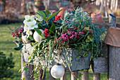 Winterlich bepflanzter Kasten mit Torfmyrte, Skimmia, Christrose, Efeu, Segge, Lavendel und Drahtwein, weiße Kugeln als Deko