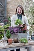 Holzkasten winterfest bepflanzen mit Winterheide, Torfmyrte, Wolfsmilch und Zuckerhutfichte