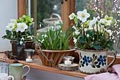 Christrosen und Schneeglöckchen in alten Keramikgefäßen