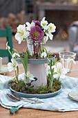 Blüten von Christrose und Lenzrose mit Schneeglöckchen in selbstgebauter Etagere