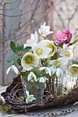 Gläschen mit Blüten von Christrosen und Schneeglöckchen