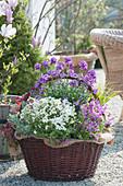 Frühlingskorb mit Gänsekresse, Goldlack, Zwergkalmus, Purpurglöckchen und Lavendel
