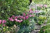 Bank im Frühlingsbeet mit Tulpen 'Dynasty', Gedenkemein, Wolfsmilch und Lenzrose