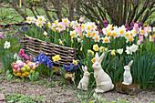 Keramik-Osterhasen und Korb mit Ostereiern am Beet mit Narzissen, Hyazinthen, Tulpen und Goldlack
