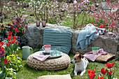 Sitzplatz im Frühlingsgarten mit Hund Zula