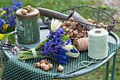 Strauß aus Hyazinthe, Traubenhyazinthe und Tulpen, Korb mit Steckzwiebeln, Pflanzschaufel, Schere und Schnur
