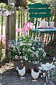 Frühlingsflirt im Holzkübel: Marokko-Margerite 'African Spring', Vergißmeinnicht und Tulpe 'Dynasty', Holzhühner und Korb mit Eiern