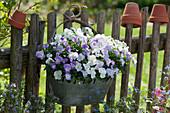 Zink-Jardiniere mit Hornveilchen am Gartenzaun