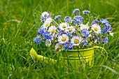 Frühlingsstrauß mit Vergißmeinnicht und Gänseblümchen mit Biene
