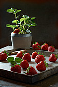 Fresh strawberries on a metal tray in front of a strawberry plant