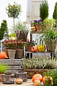 Herbstliche Terrasse mit Knospenheide, Torfmyrte, Seggen, Hornveilchen und Kürbissen
