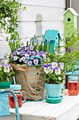 Frühlings Arrangement mit Stiefmütterchen, Hornveilchen und Traubenhyazinthen