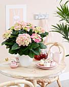 Hydrangea macrophylla 'Early Rosa'