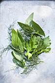 Various fresh herb leaves