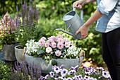 Schale mit Dahlie und Glockenblumen gießen