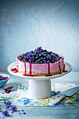 Bluberry cheesecake with bluberry sauce and lavender