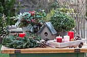 Adventliches Arrangement mit Kerzen, Kranz, Nestfichte, Skimmie, Torfmyrte, Purpurglöckchen und Vogelhaus