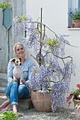 Frau mit Hund Zula sitzt neben blühendem Blauregen