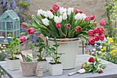 Strauß aus roten und weißen Tulpen, Töpfe mit Jungpflanzen von Sellerie