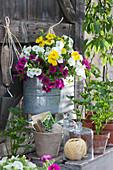 Zink-Jardiniere mit Zauberglöckchen 'Magenta' 'Golden Yellow' 'White', Sellerie Jungpflanzen in Tontöpfen