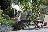 Kleine Sitzgruppe auf mediterraner Kiesterrasse mit Zitronenbäumen, Schopflavendel und Bohnenkraut,  Katzenminze im Beet