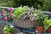 Kräuter und Gemüse auf dem Balkon ziehen: Bohnenkraut, Salat, Sellerie und Hängegeranie