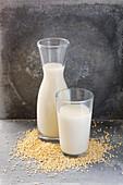 Millet drink and millet grains