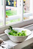 Frische Brunnenkresse im Seiher auf Fensterbank