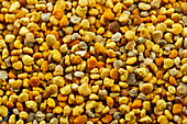 Bee pollen (full picture)