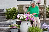Frau zupft verblühte Blüten von Petunie ab