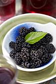 Morus rotundiloba 'Mojo Berry'