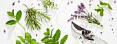 Sommer-Kollage mit Lavendel und Kräutern
