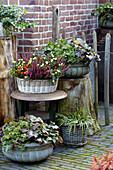 Herbstbepflanzung auf der Terrasse