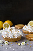 Kleine Key Lime Pies