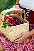 Woman holding basket full of lingonberries