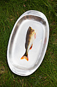Fish on metal serving dish
