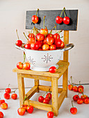 Yellow and orange 'Stardust' sweet cherries in a colander on a wooden chair