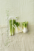 Fennel on a white tablecloth