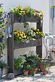 Platzsparende Sommerbepflanzung mit Ringelblumen, Kapkörbchen, Elfenspiegel, Zauberglöckchen, weißem Lavendel, Zitronenverbene, Steinquendel und Kapuzinerkresse