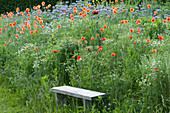 Bank an Blumenwiese mit Kamille, Klatschmohn und Büschelschön