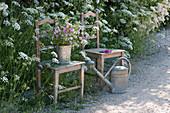 Stühle am Beet mit der großen Bibernelle, Strauß aus Wiesenblumen in Zinkeimer