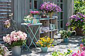 Sommer-Terrasse mit Petunie 'Raspberry Star' 'French Vanilla' 'Caramel', Bartfaden 'Pentastic Rose' Elfensporn, Zauberglöckchen und Hortensie