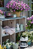 Sommer-Terrasse mit Petunie 'Raspberry Star' 'French Vanilla', Zauberglöckchen
