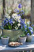 Kleine Frühlingsdekoration mit Blaustern, Goldlack, Hornveilchen und Kugelprimel